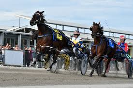 Warragul Harness Horse Racing Track Review